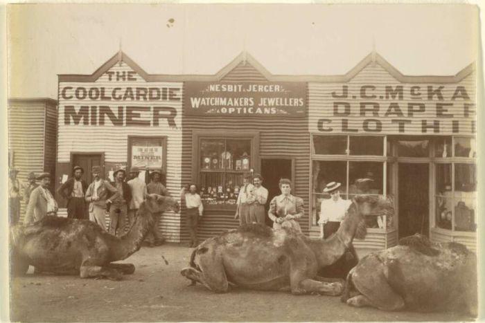 Camels Coolgardie