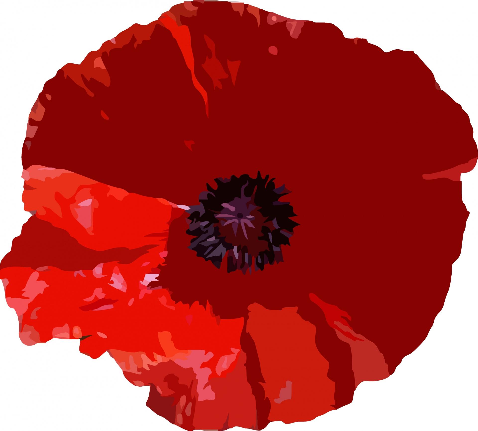 poppy-1479509759UKR